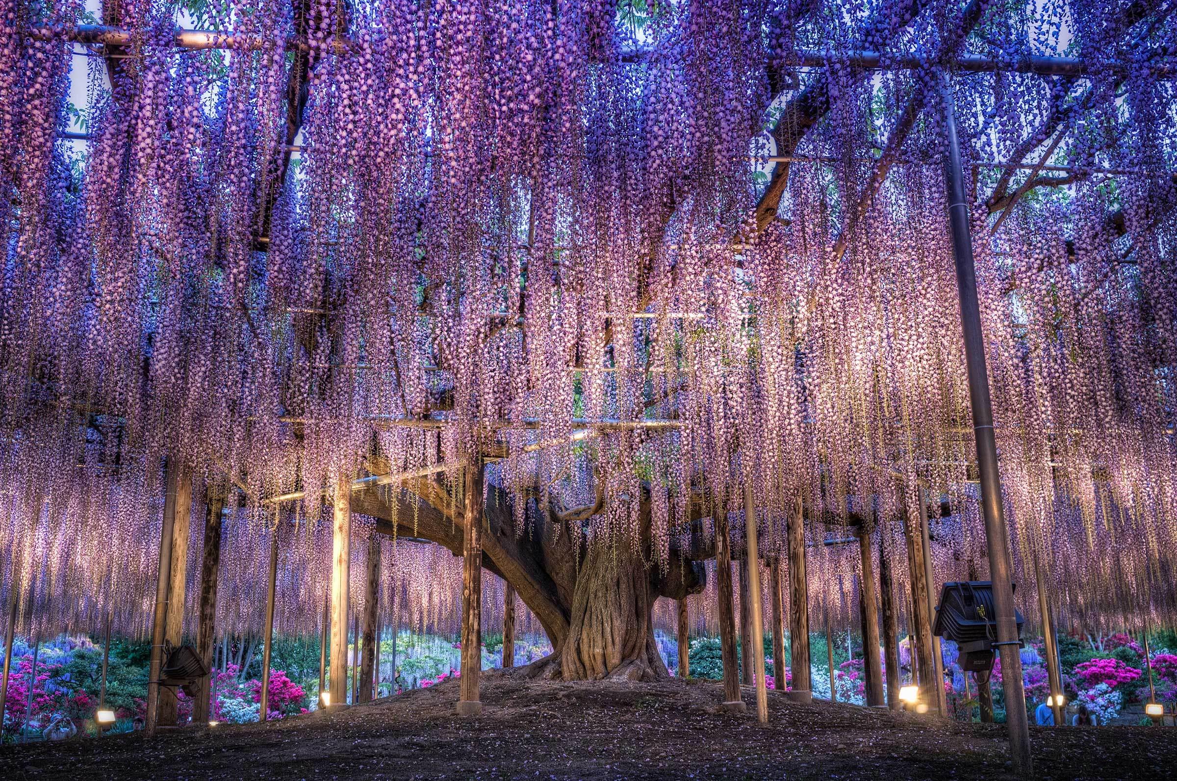 Цветущее дерево цветы лес