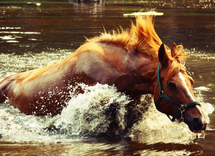Купание коня лошадь вода