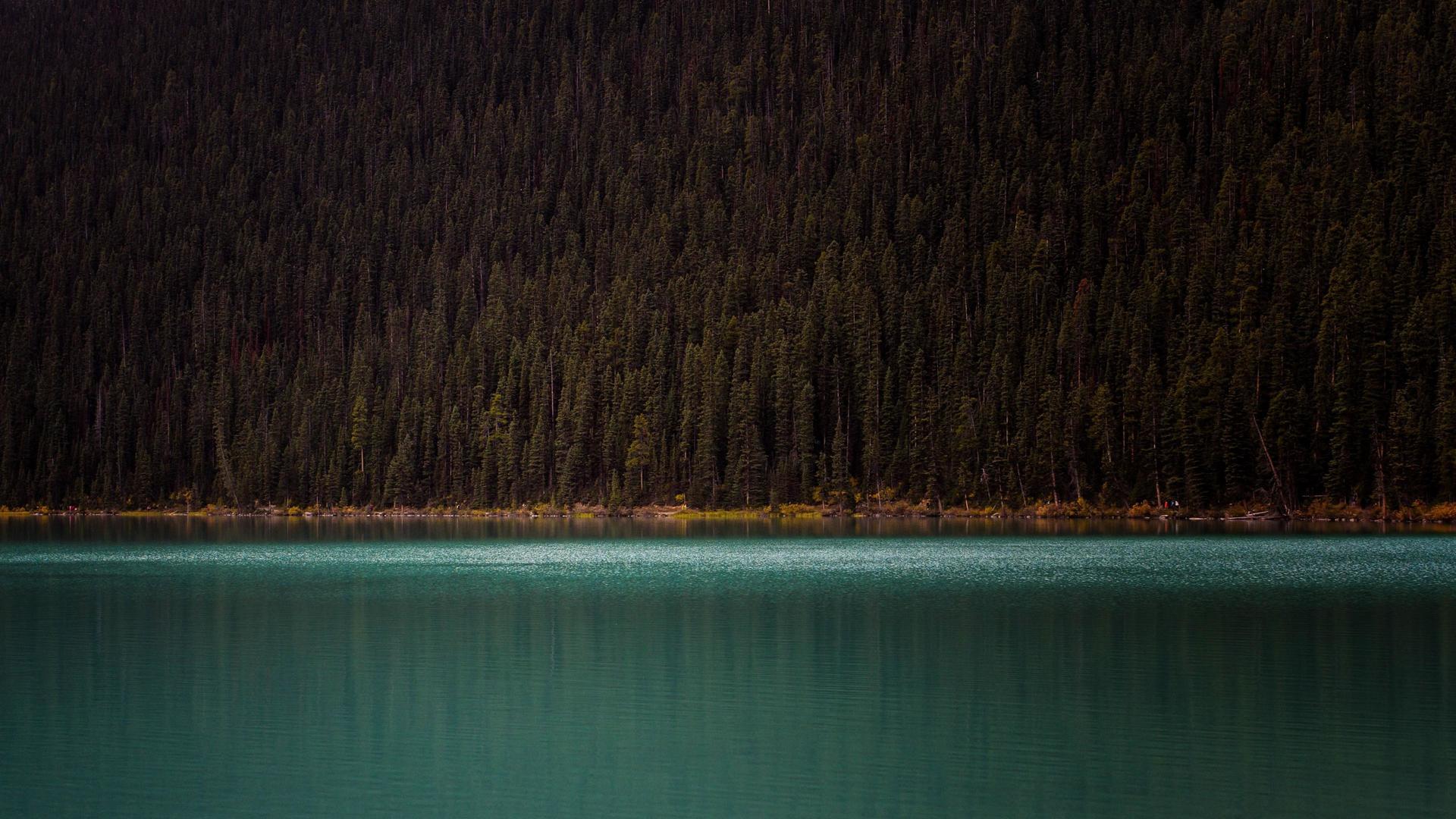 Лесной берег озеро лес вода