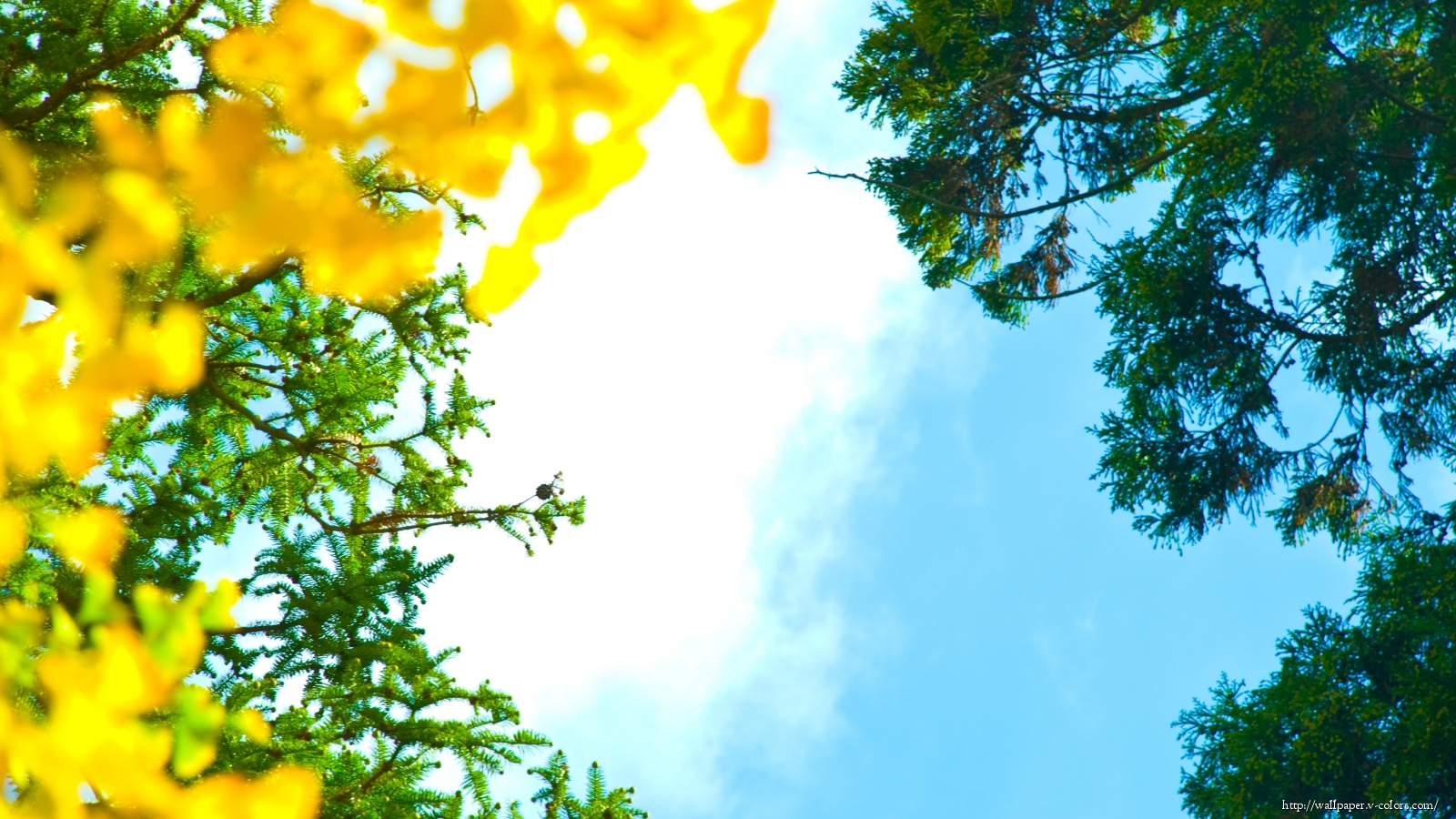 Летнее небо цветы небо лето лес