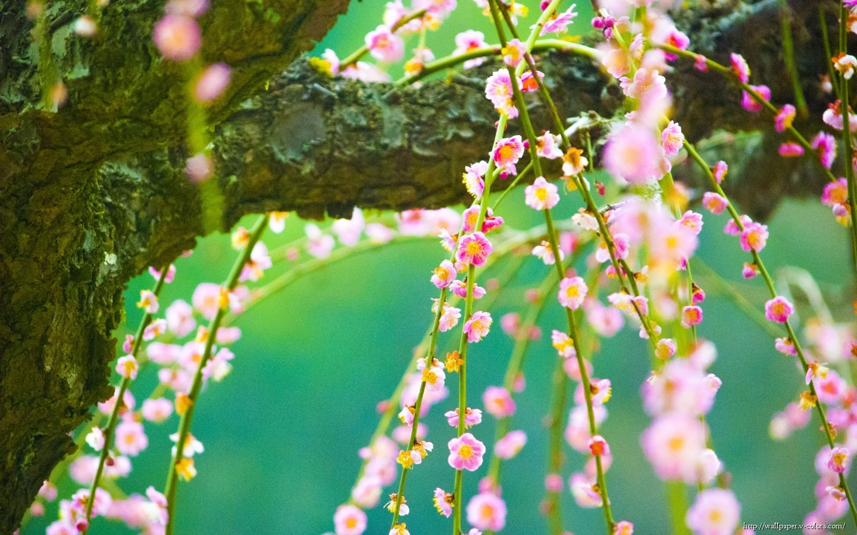 Луговые цветы цветы лето дерево
