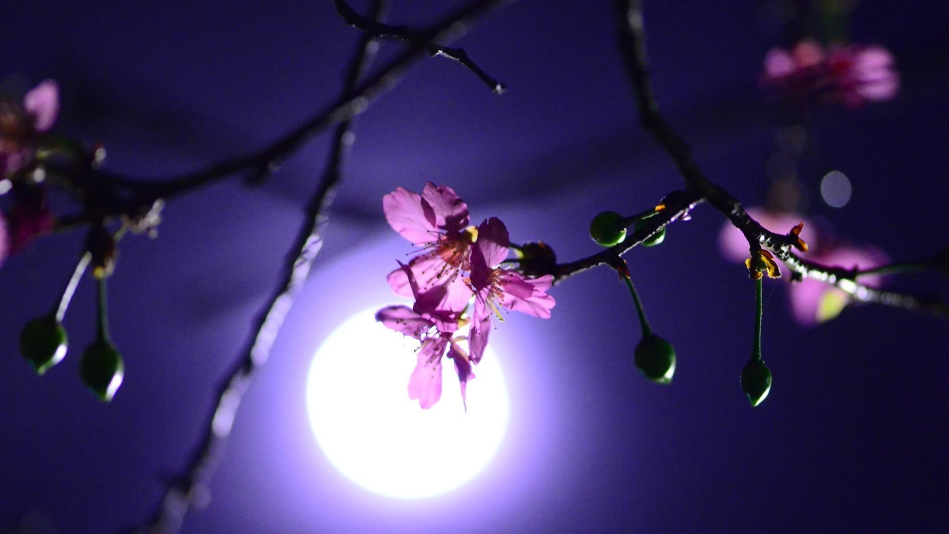Луна и цветы цветы ночь луна