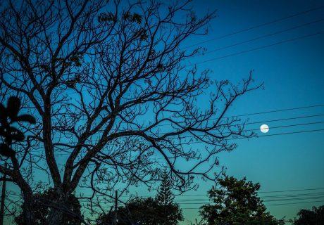 Лунная соната ночь луна лес