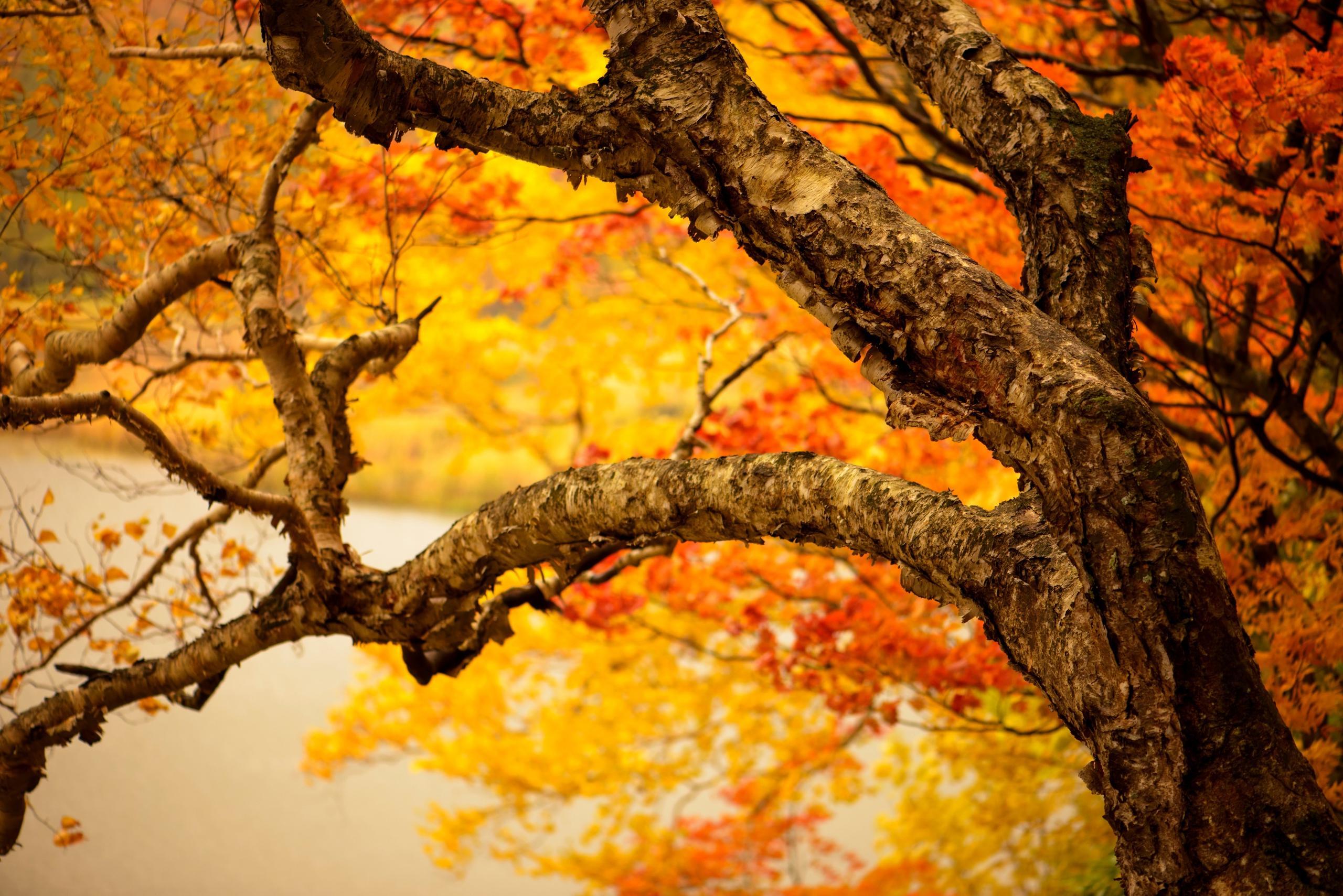 Осень осень лес