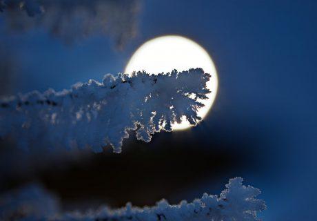 Полная луна зимой ночь луна лес зима