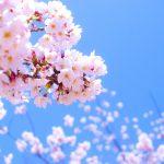 Розовые цветы цветы