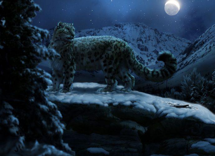 Снежный барс зимней ночью ночь луна кошки зима