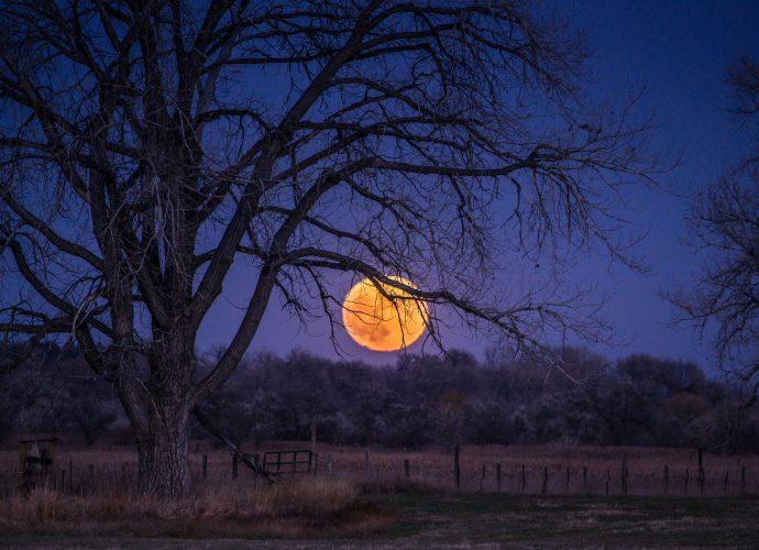 Суперлуние ночь луна лес