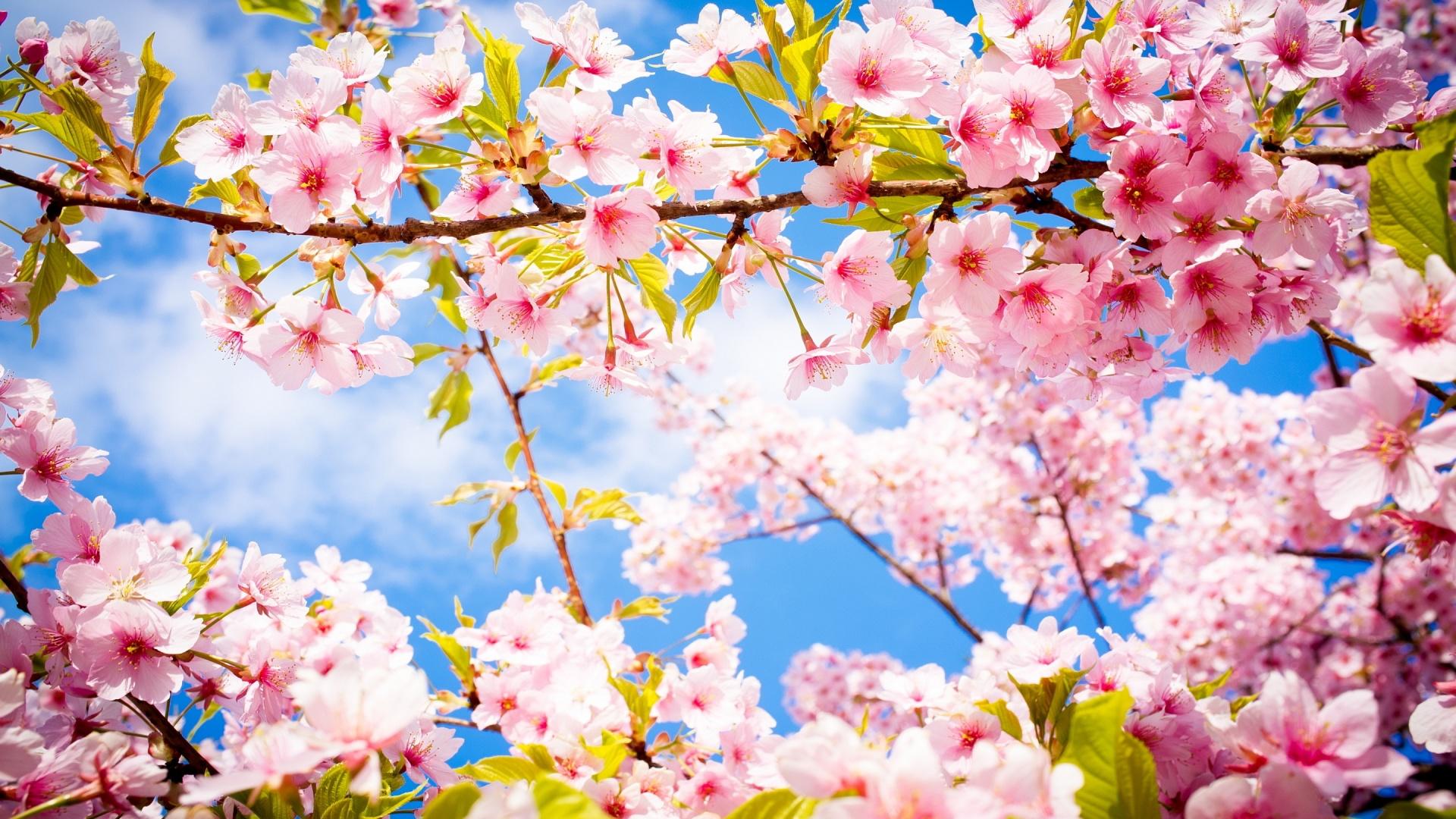 Весенний цвет цветы весна