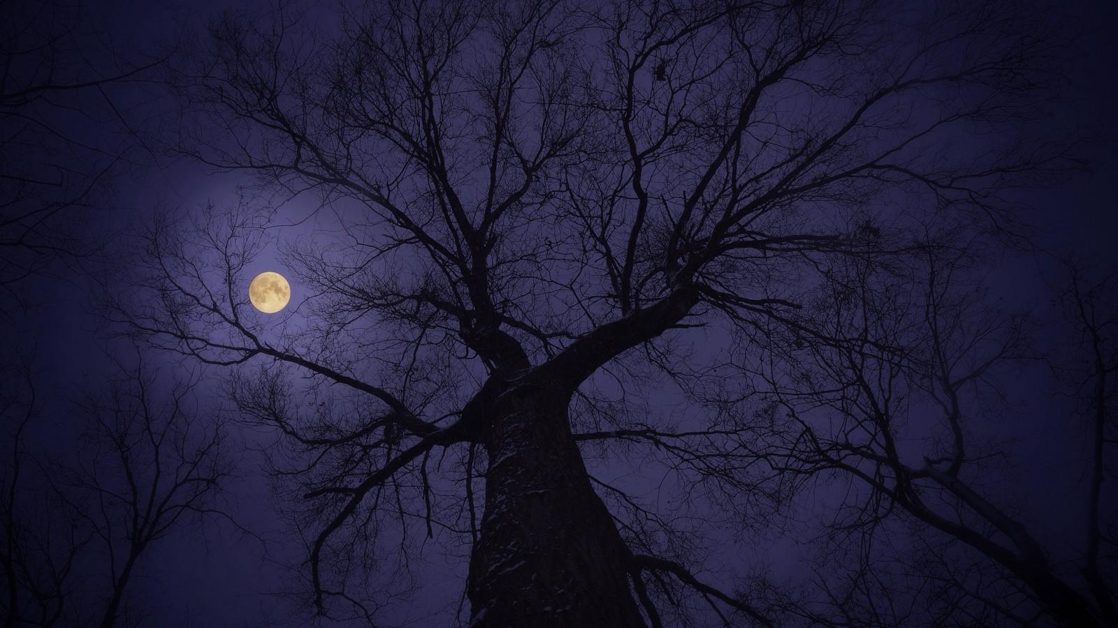 Зловещее полнолуние ночь луна лес