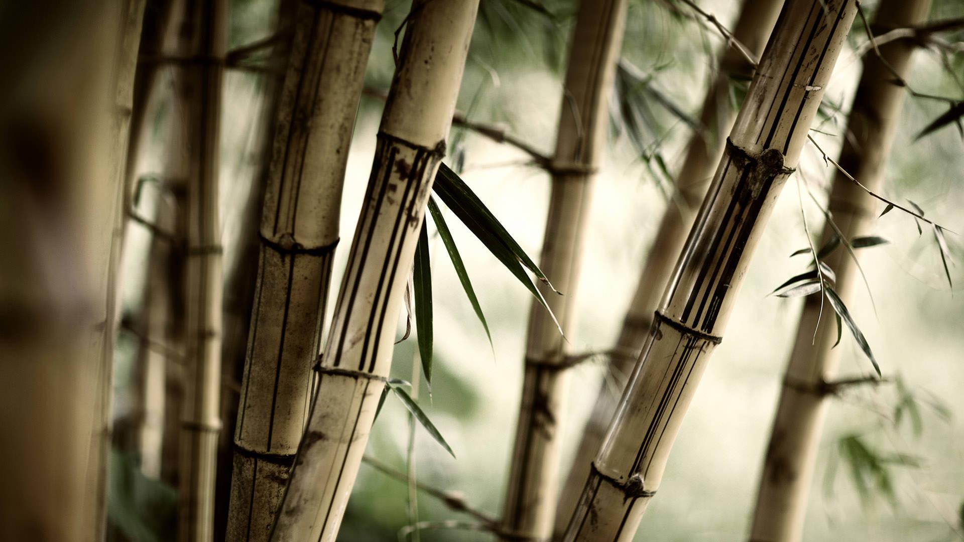 Бамбуковая роща лес бамбук