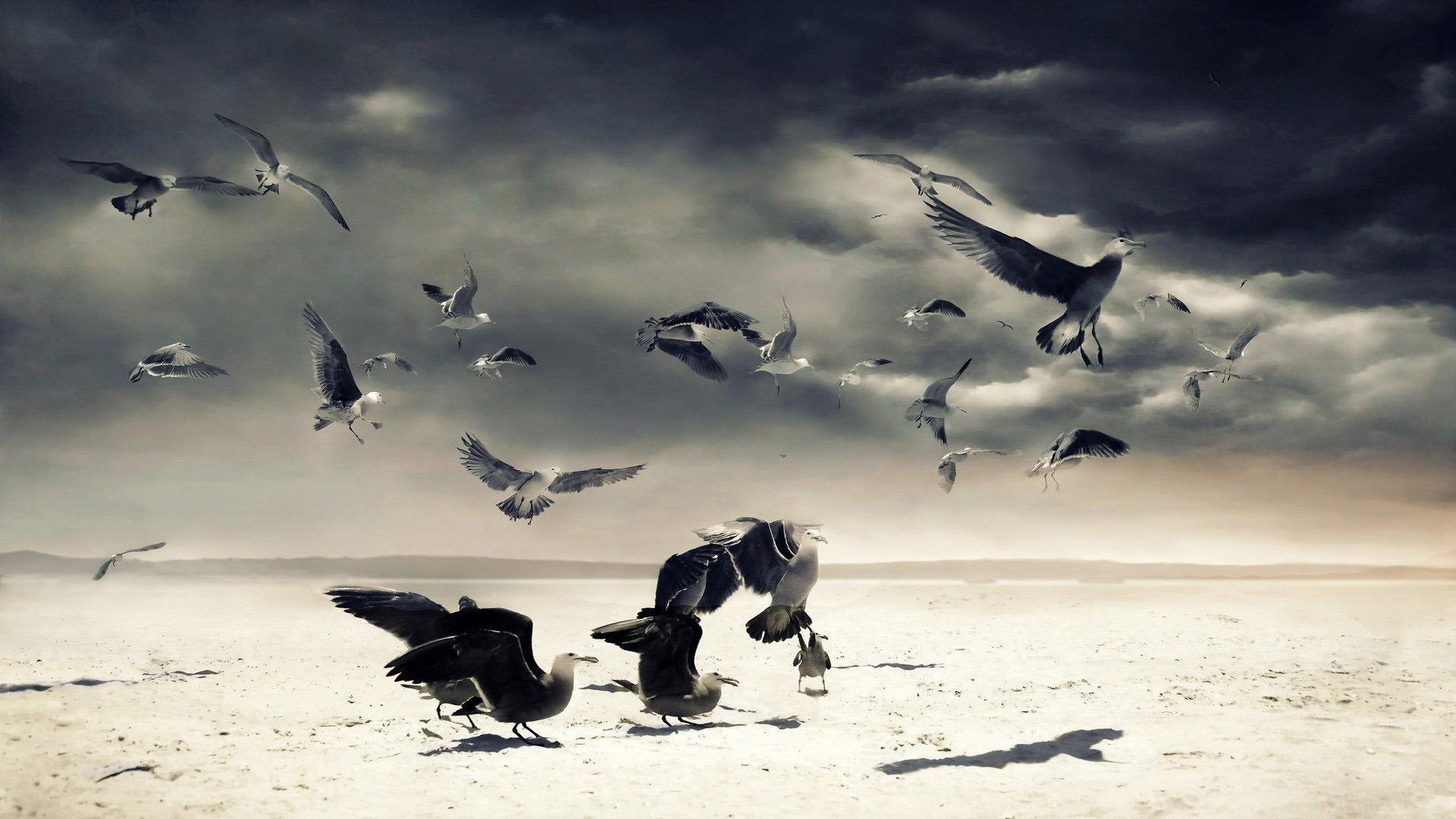 Чайки чайки птицы
