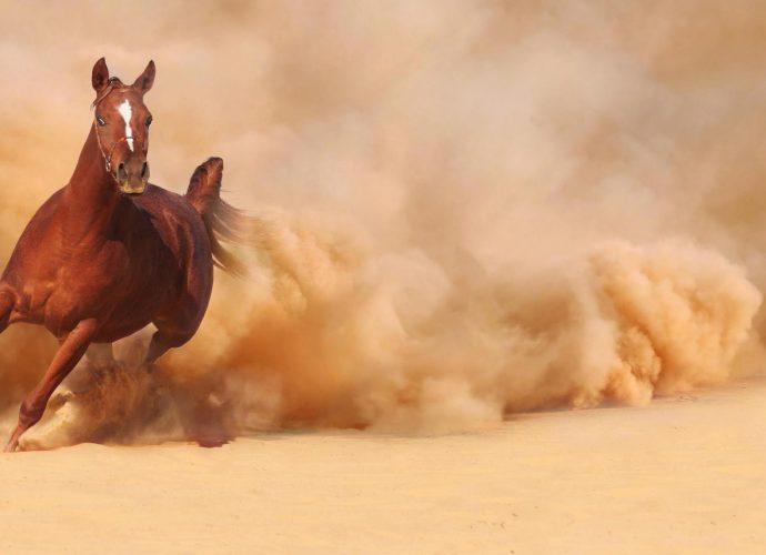 Мчащийся конь пыль пустыня лошадь