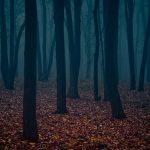 Осенний лес туман осень лес