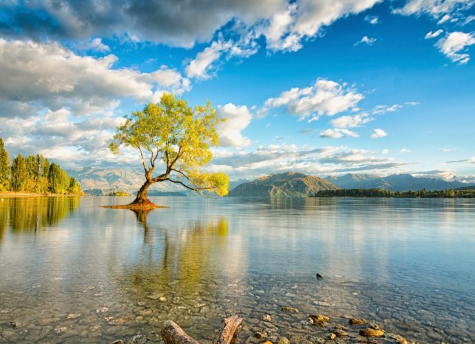 Озеро Ванака, Новая Зеландия озеро дерево вода