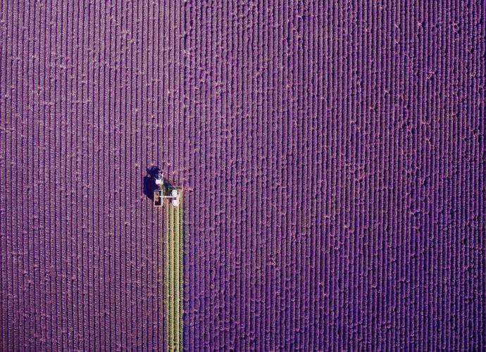 Прованс, летняя уборка цветы поле