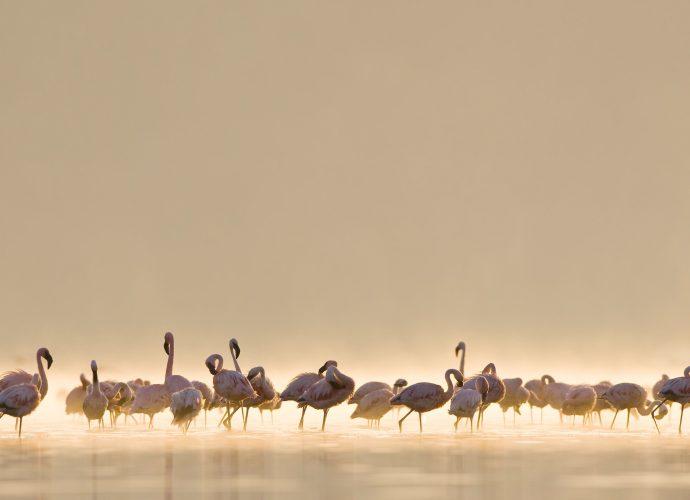 Розовые фламинго фламинго птицы вода