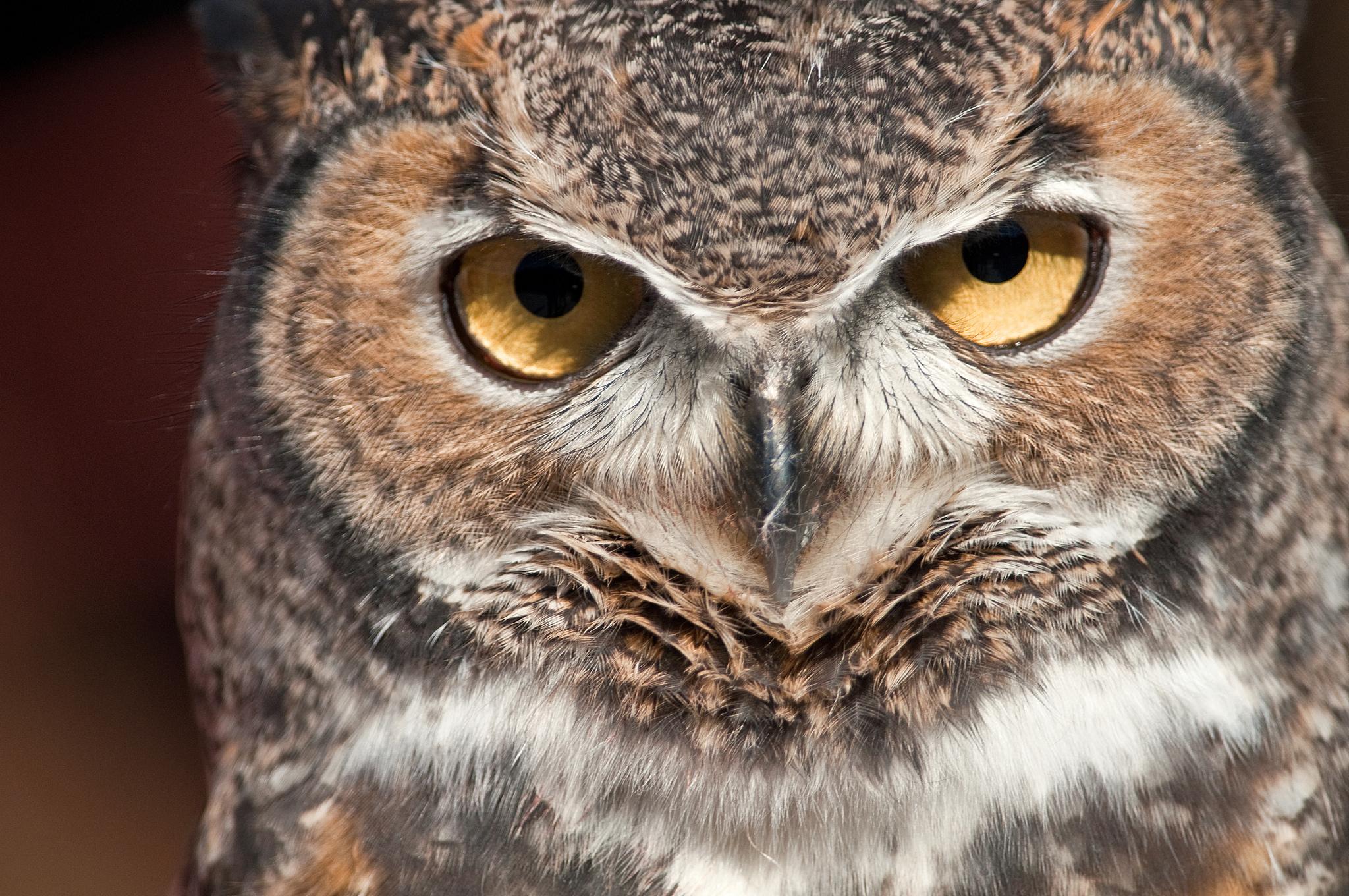 Совиный взгляд сова