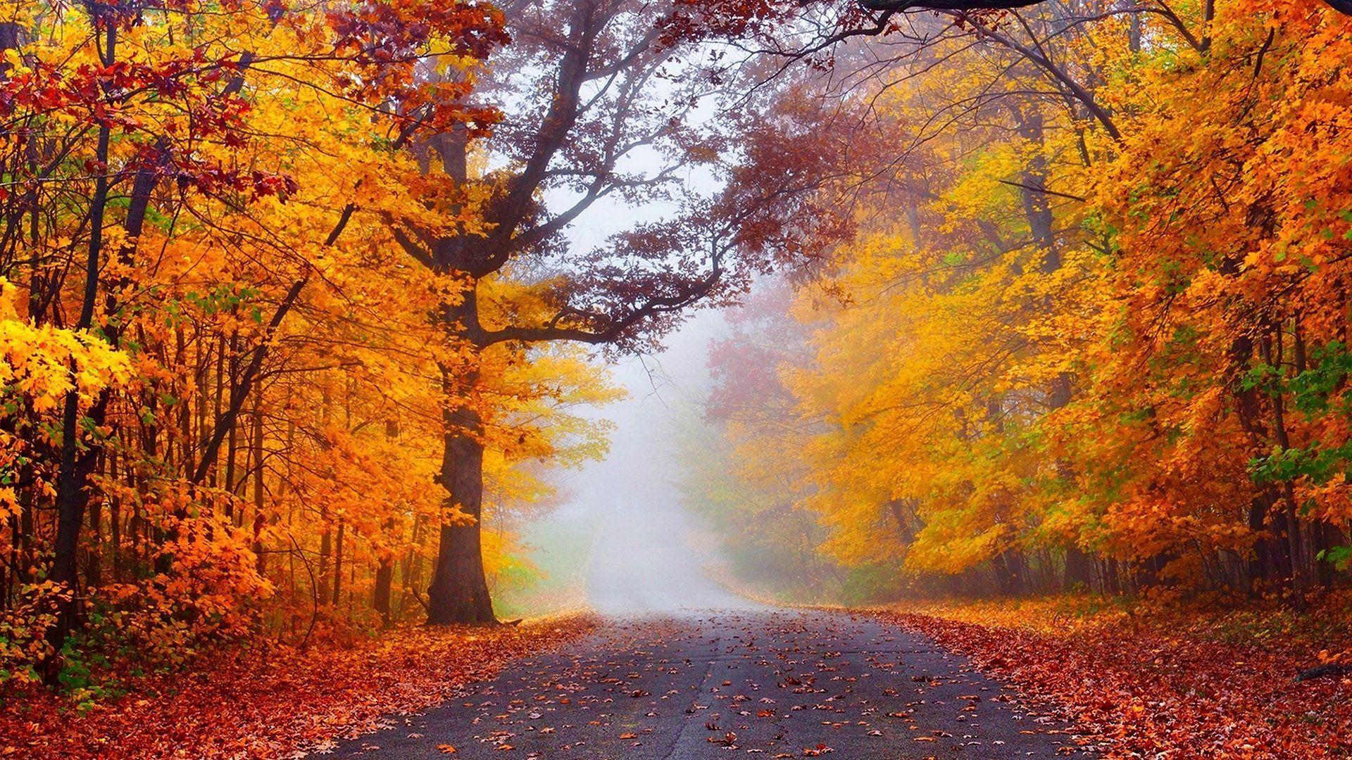 Дорога в осеннем лесу туман осень лес дорога