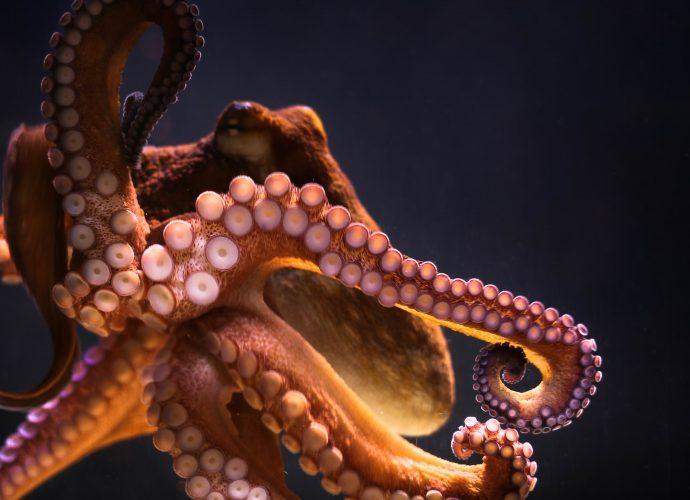 Гигантский осьминог осьминог море