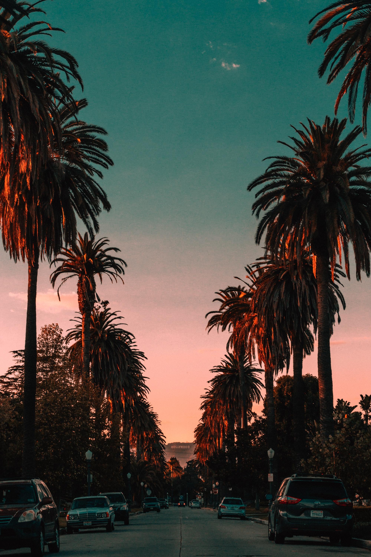 Голливудские аллеи США пальмы закат дорога дерево