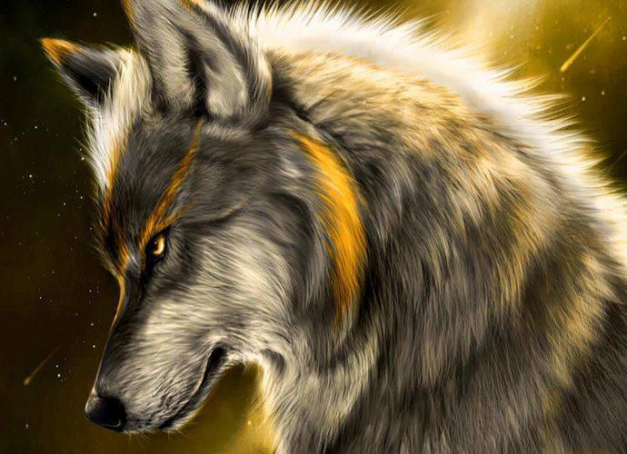 Ночной волк ночь волк