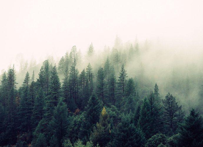 Туман в лесу туман лес дерево