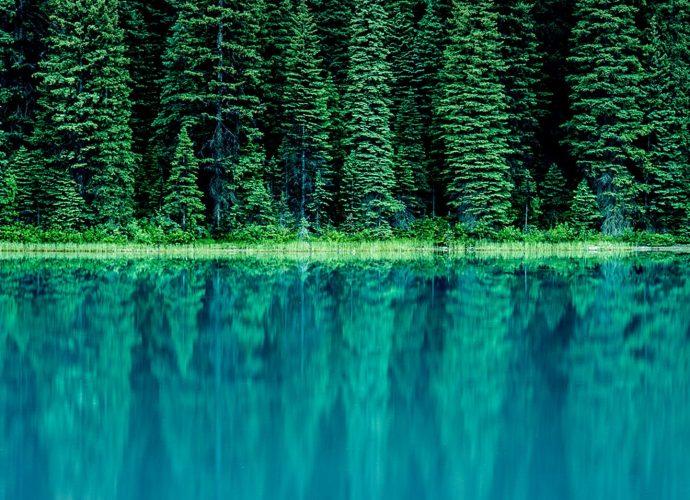 Озеро в лесу озеро лес