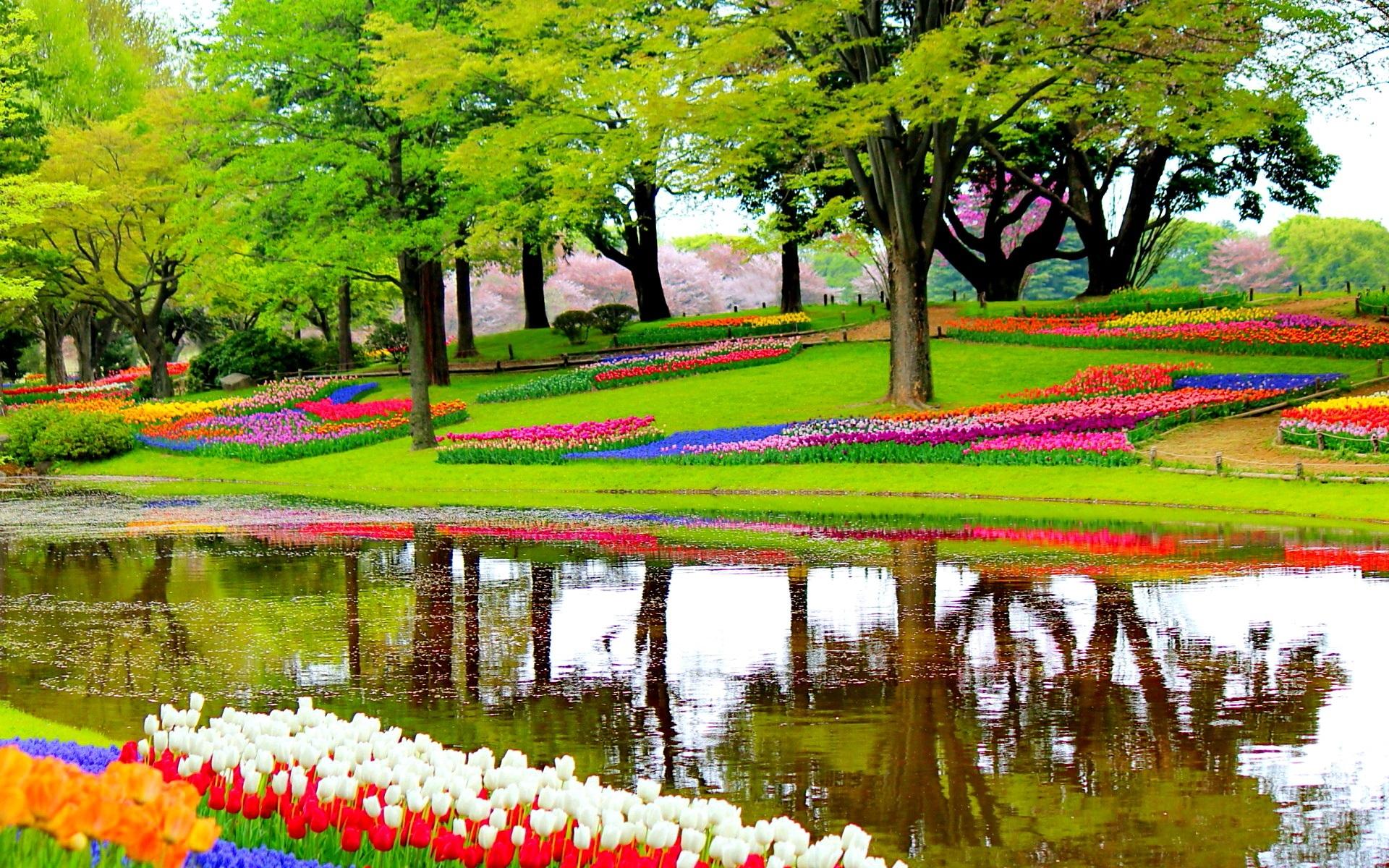 Весенний сад цветы тюльпаны дерево вода