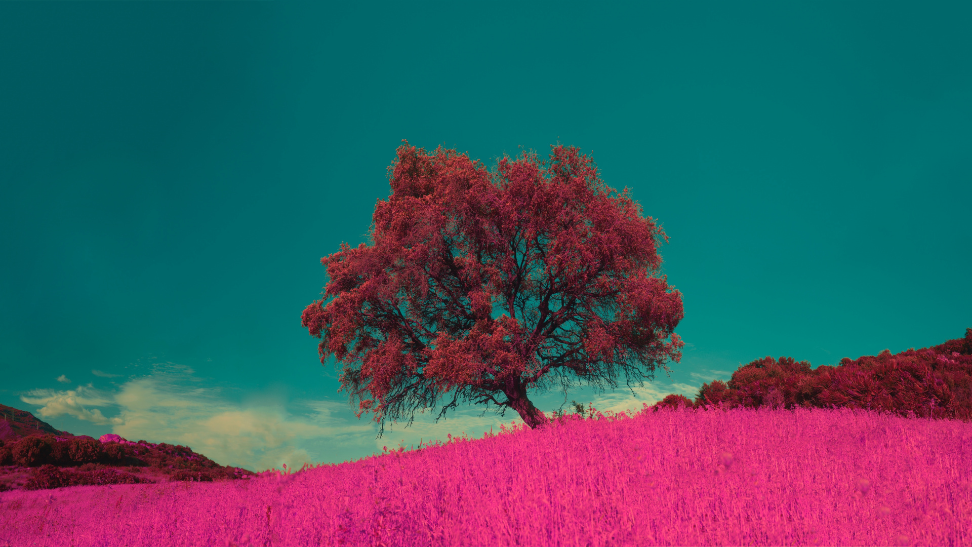 Розовый луг цветы луг дерево
