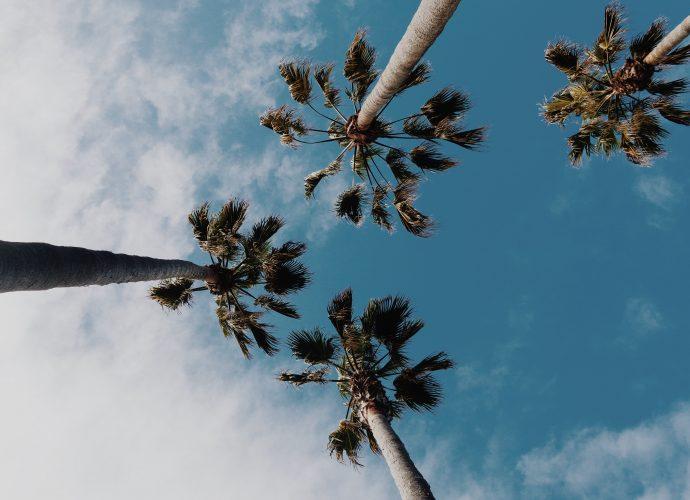 Пальмы в небе пальмы небо