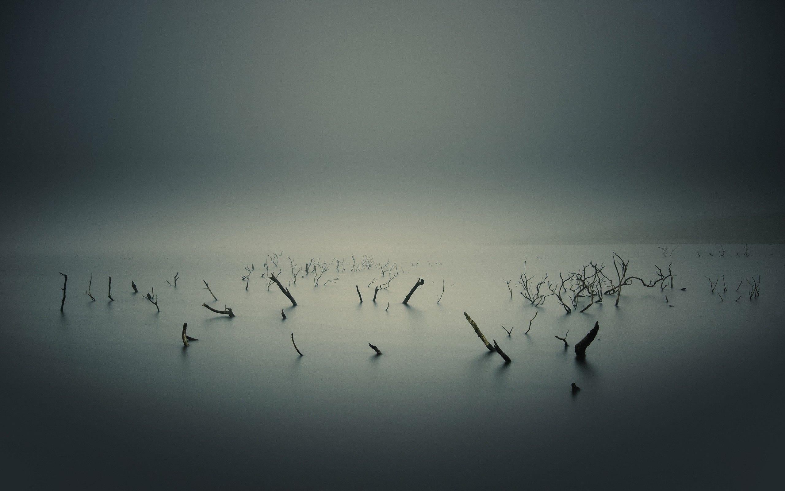 Мёртвое озеро туман озеро