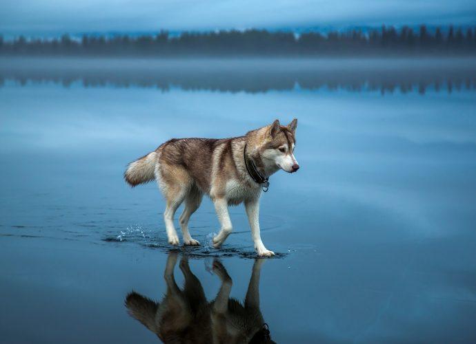 Хаски на замерзшем озере хаски собаки озеро