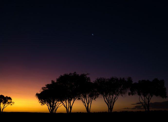 Закат в парке Сиеста закат дерево