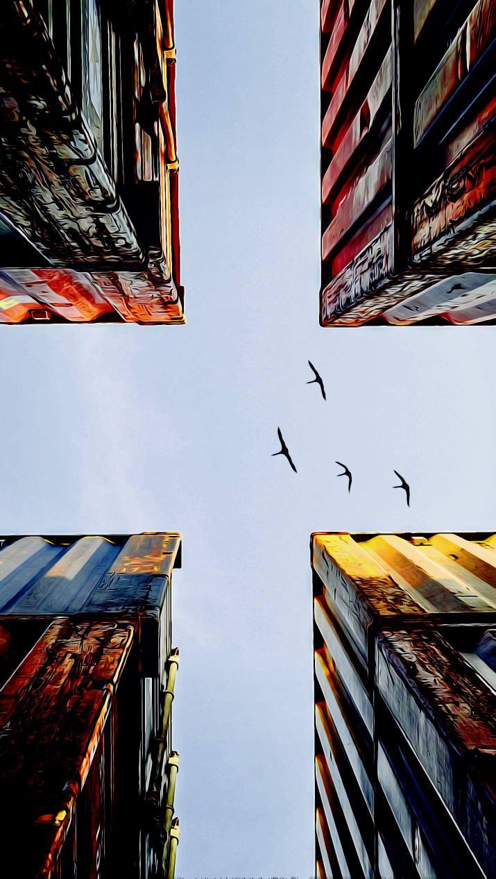 Контейнеры чайки птицы контейнеры город