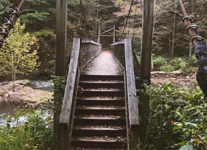 Деревянный мост в лесу мост лес