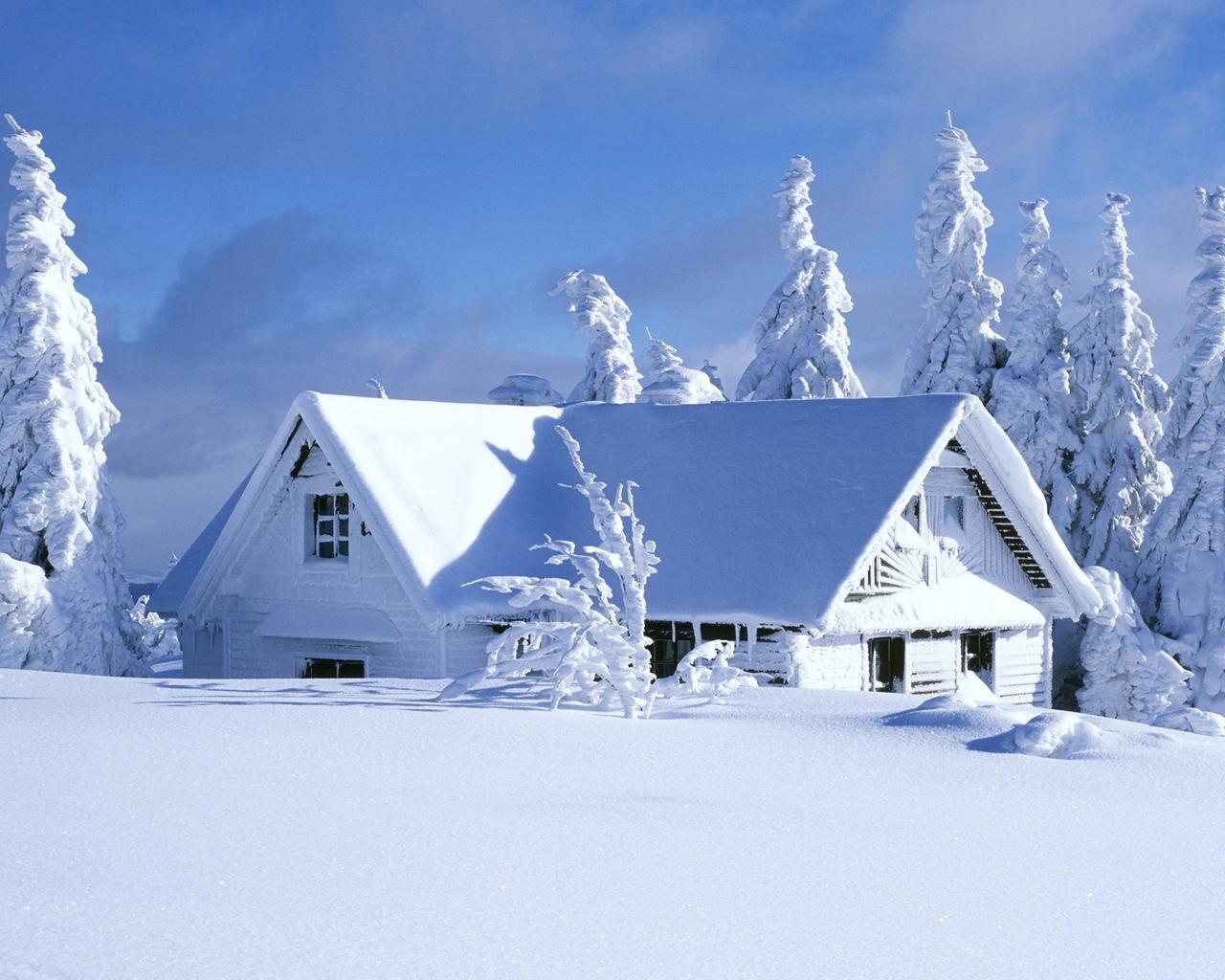 Свежий снег снег лес зима