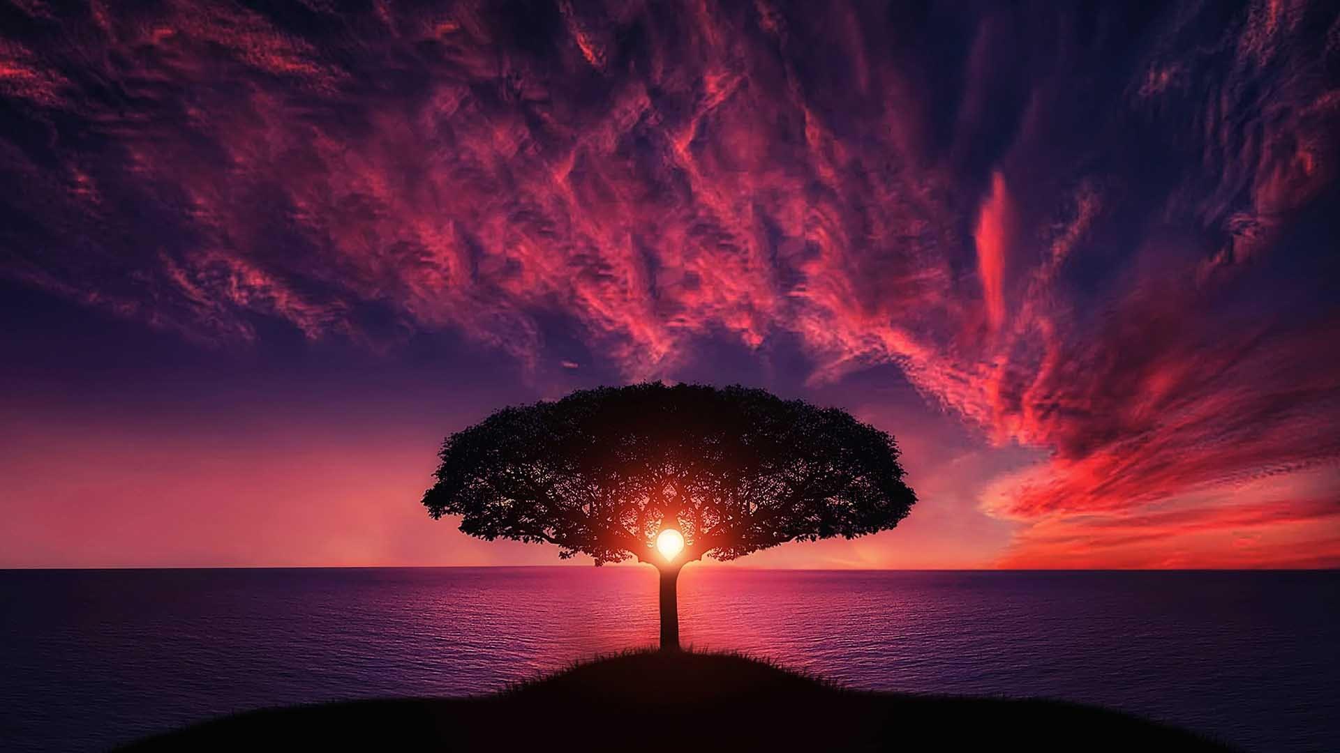 Время заката небо море закат дерево