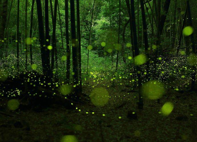 Паутина в лесу солнце паутина лес