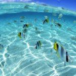 Под водой рыба море