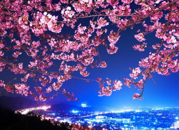 Вишневый цвет цветы сакура небо дерево вишня