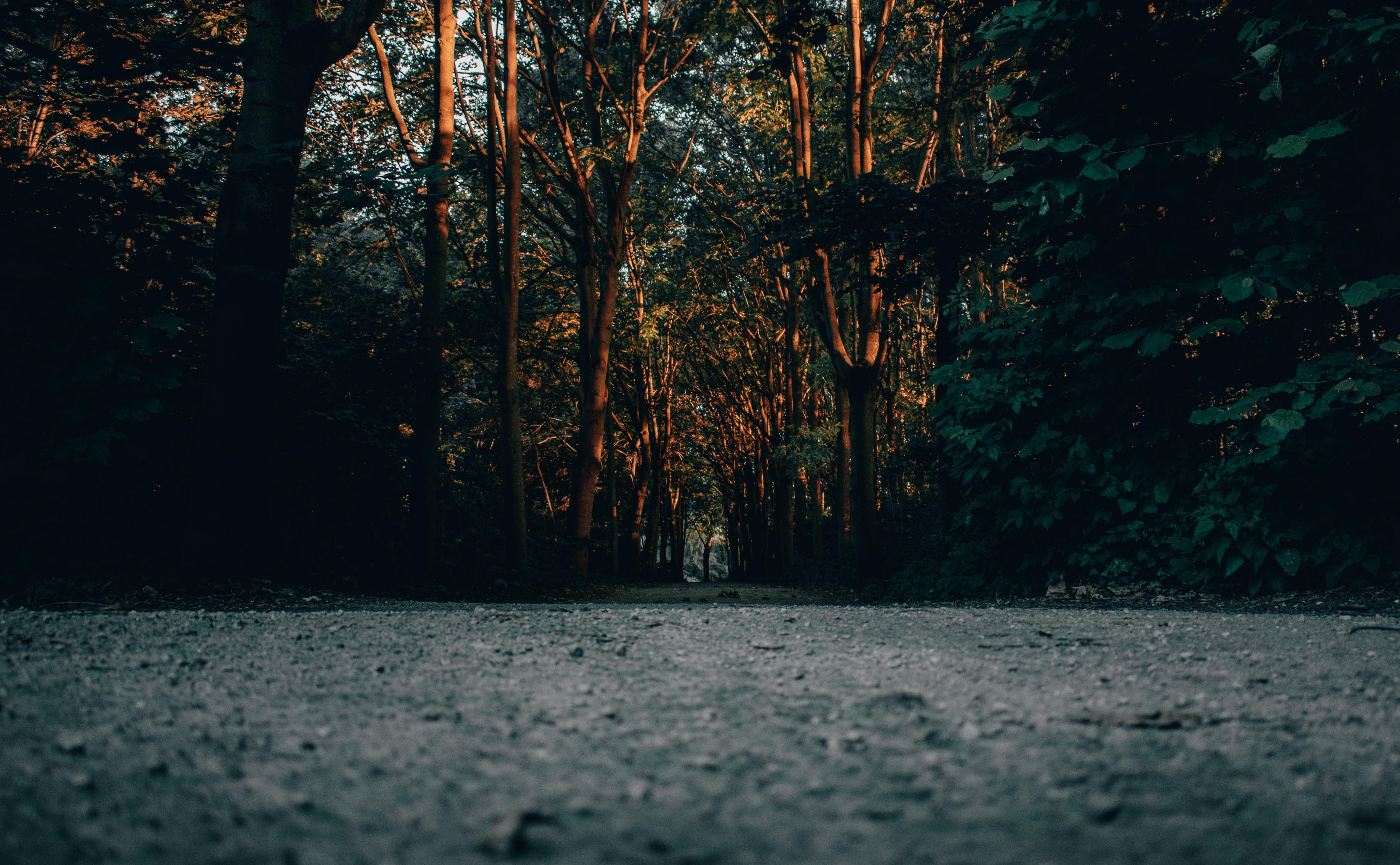 Утро в парке рассвет лес закат дорога дерево