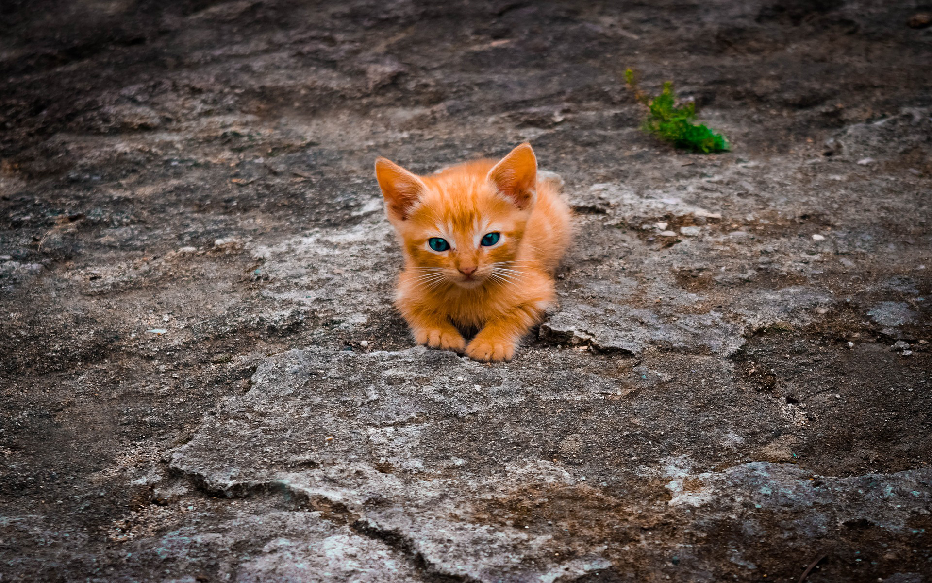 Милый рыжий котёнок кошки котенок кот