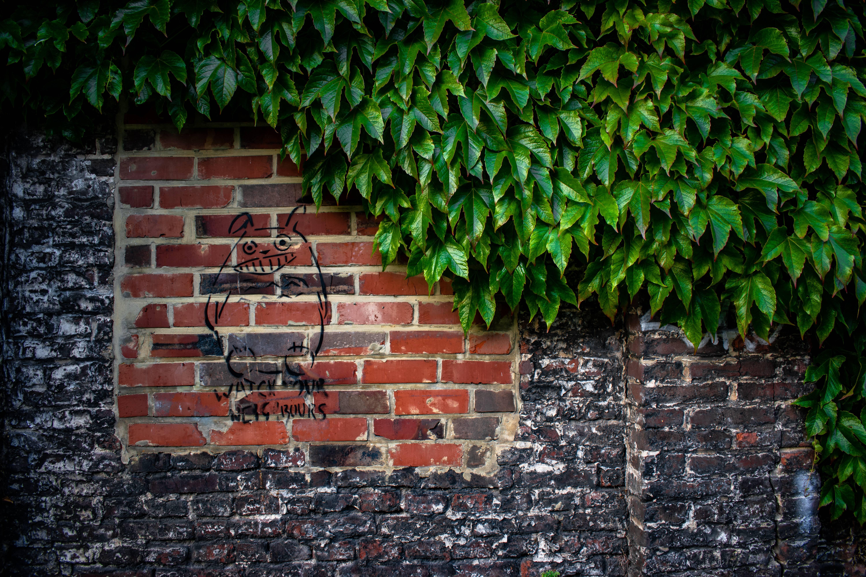 Следи за собой стена плющ зелень граффити