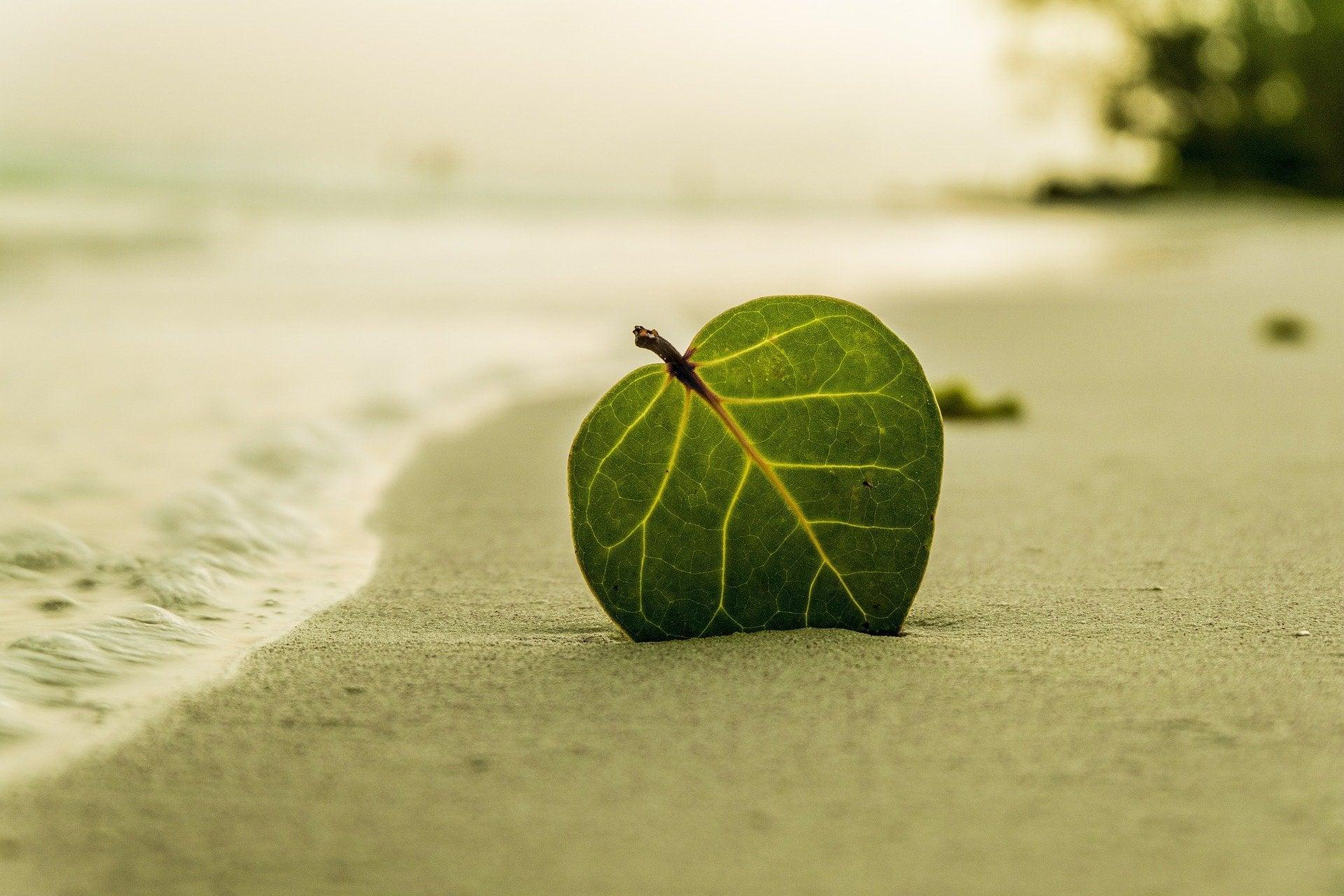 Лист на пляже песок море лето зелень дерево