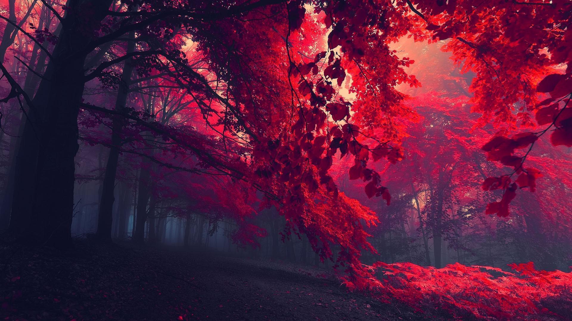 Осенний лес осень лес деревья