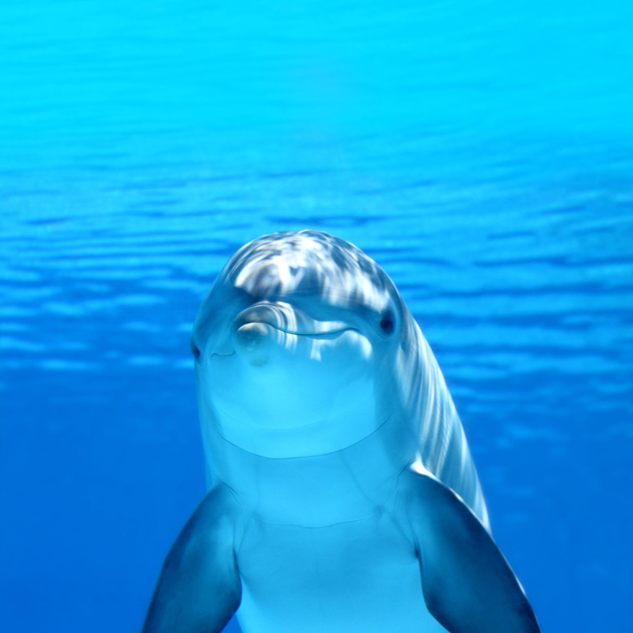 Дельфин море дельфин