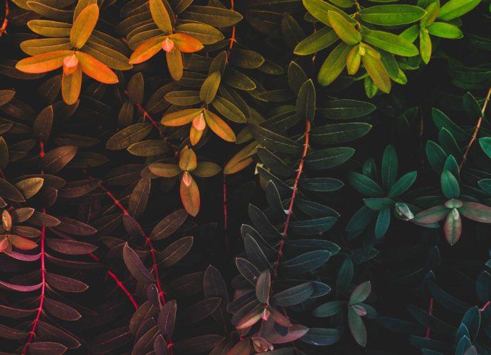 Радужные листья цвет осень листья дерево