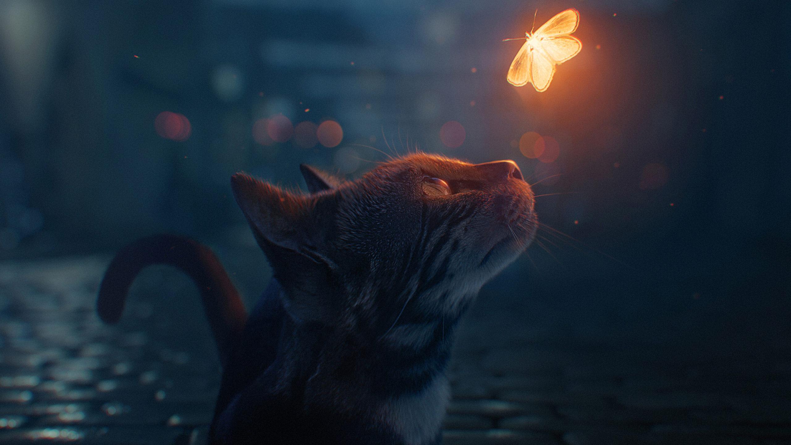 Волшебная бабочка ночь кот бабочка