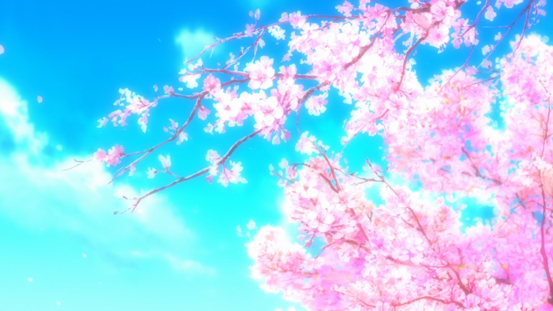 Сакура в цвету сакура дерево весна